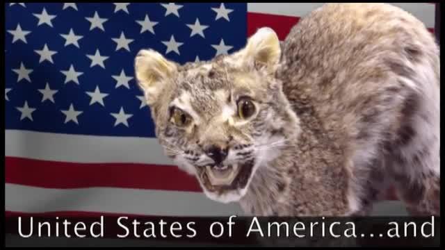 Bobcat Video - May 22, 2017