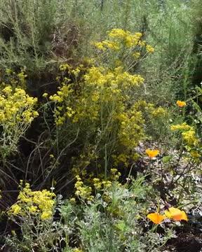 Buena Park Junior High School's Native Habitat Garden