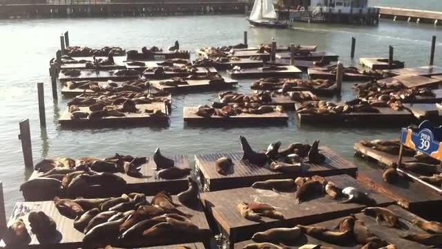 Sea Lions, not Seals.