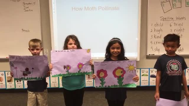 Pollination Presentation