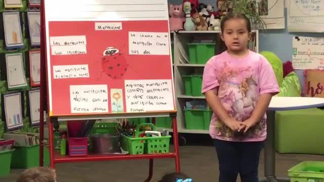 Kindergarten lady bug presentation