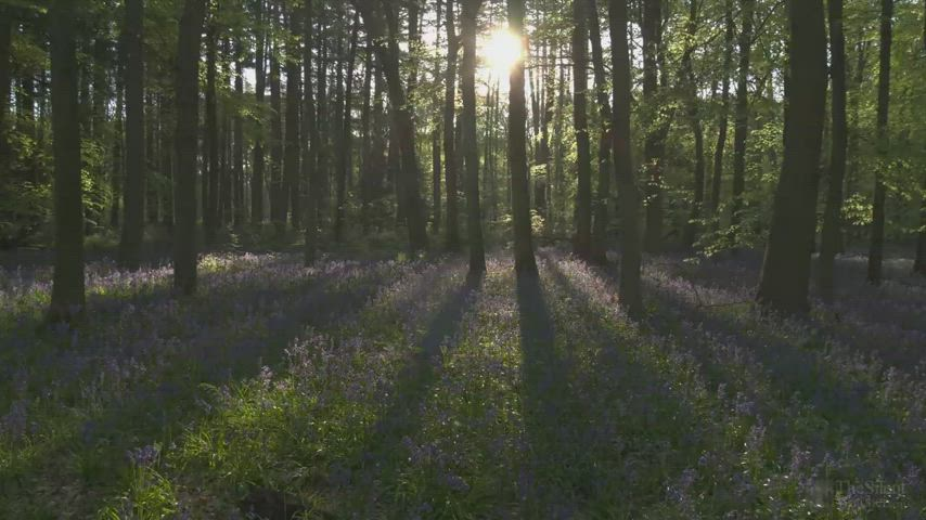 Bird song and forest sounds