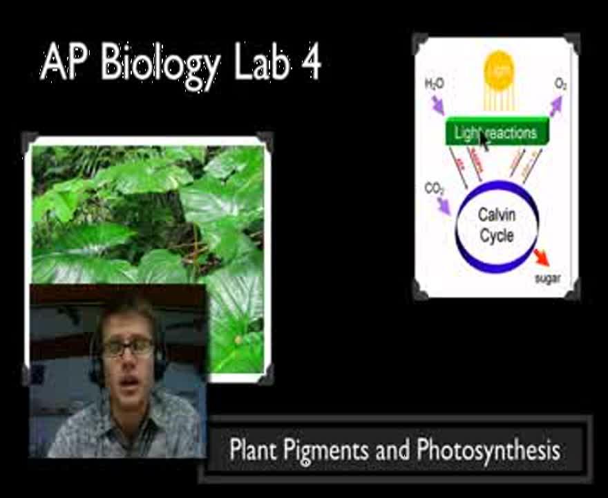ap photosynthesis lab