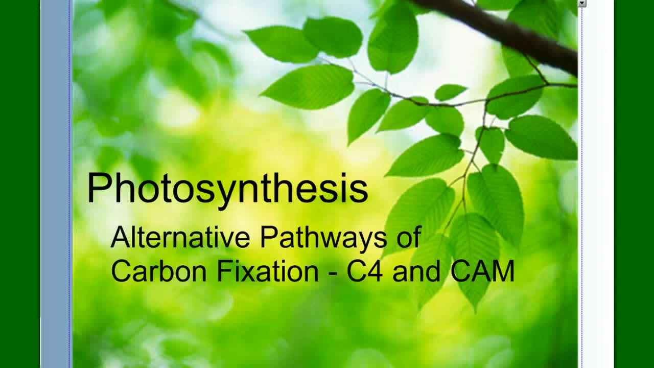 Photosynthesis - C4 and CAM | Kealakehe High School