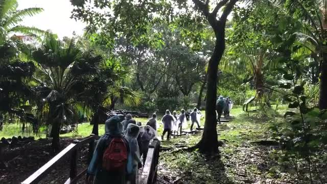 Short video of students walking through rain forest