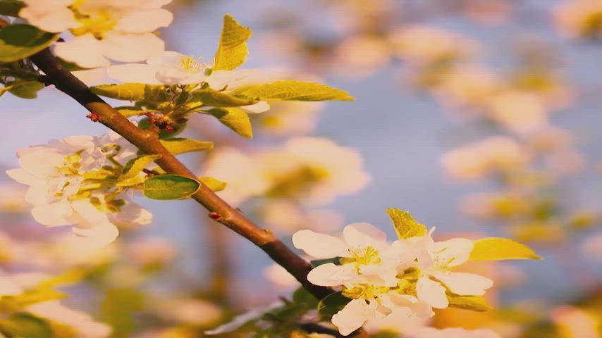 Spring Planning Image