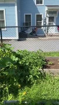 Video of school garden