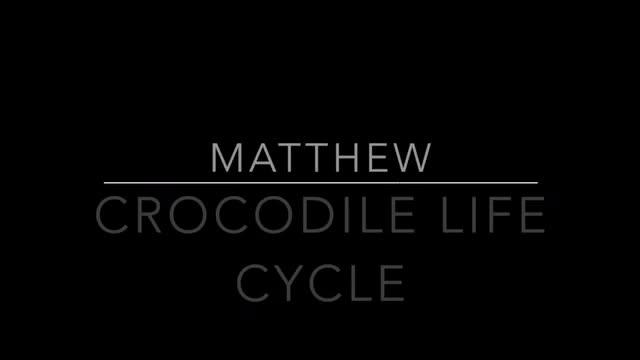 Croc Life Cycle
